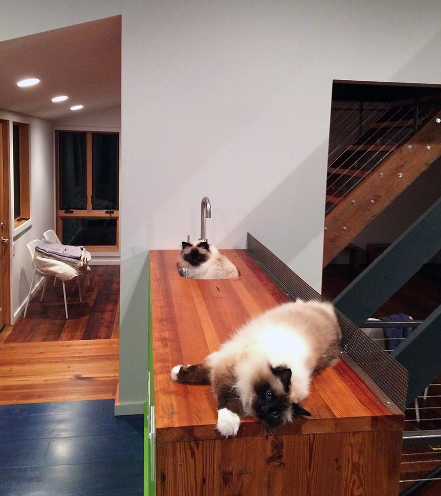 studio cats - rothko and minka,
